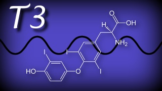 triiodothyronine